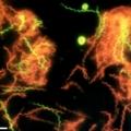 Mikroorganizmai.jpg