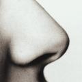 Nosis.jpg