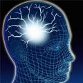 Smegenys.jpg