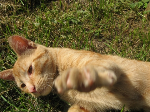 Mažas katinėlis