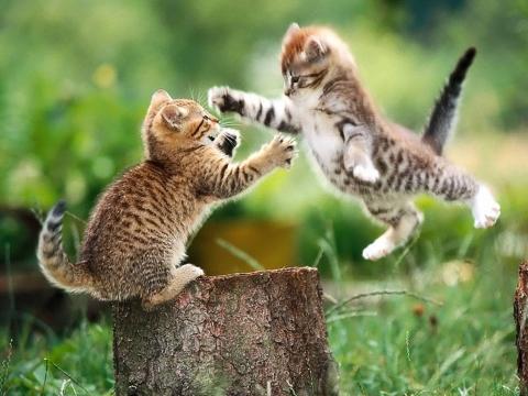 Katinukų šokis