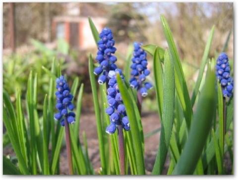 2009 m. pirmoji pavasario diena