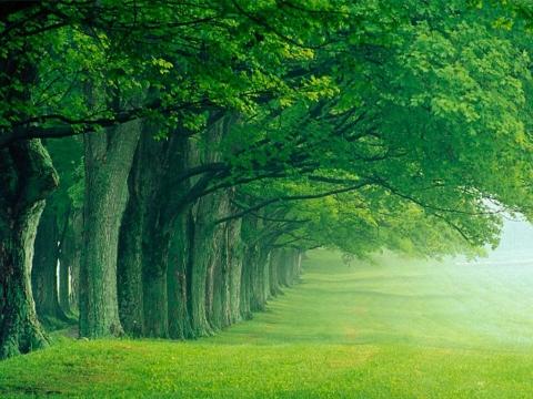 Vasara - gamta